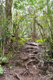 Trecking path in the laurel forest, gomera Stock Photo