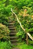 Treden in een trillend groen flard van aard Stock Afbeeldingen
