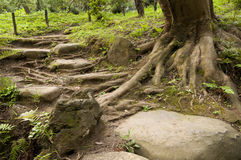 Treden en boom in japaneese tuin sankei-Sankei-en Royalty-vrije Stock Afbeeldingen