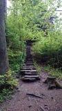 Treden in het bos Stock Foto's