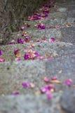 Treden met bloemen Royalty-vrije Stock Afbeelding