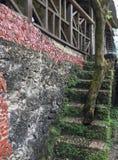 Treden met boom het groeien binnen de trappen Caraïbisch milieu stock foto