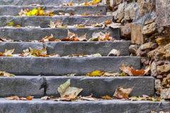 Treden met de herfstbladeren Stock Afbeeldingen