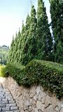 Treden met struiken en bomen stock fotografie