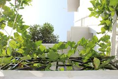Tredetraliewerk met planters stock afbeeldingen