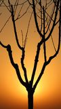 The tree's silhouette Vector Illustration