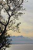 Tree俯视的湖和山的剪影 图库摄影