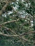 Tree湖cunningham 库存照片