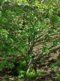 Tree湖cunningham 图库摄影