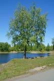 Tree生长近的湖 免版税图库摄影