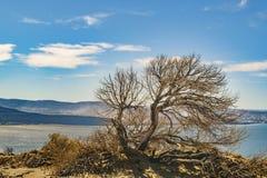 Tree árido Punta del Marquez Viewpoint Chubut la Argentina Foto de archivo