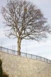 Tree överst av stenväggen Fotografering för Bildbyråer