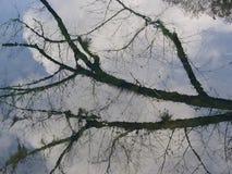 Tree& x27 αντανάκλαση του s Στοκ Εικόνα
