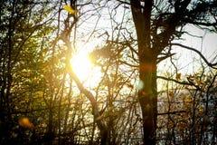 Treeπου προσέχει το ηλιοβασίλεμα Στοκ Εικόνες