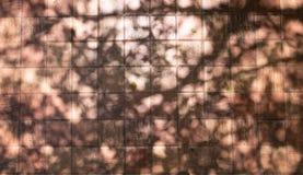 tree&#x27的剪影背景; s分支,当暴露 免版税库存图片