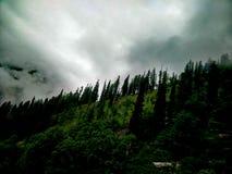 Tree& x27; 跑在小山下的s 免版税库存图片