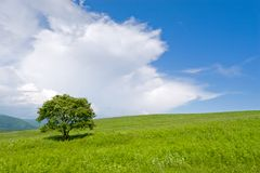 Tree 1. Summer. A lonely tree. Foothills. Before a rain.Wind Stock Image