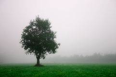 Tree #1 (green). Artist's vision of a foggy morning scene Stock Photography