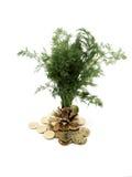 Tree_1 verde imagem de stock