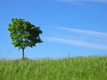 Tree. View Royalty Free Stock Photography