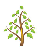 Tree. Vector Tree on White Background Vector Illustration