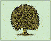 Tree. Vector illustration of a oak tree isolated on light background. Additional  format Illustrator 8 eps Royalty Free Stock Photo