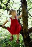 On the tree Royalty Free Stock Photo