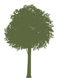 Tree. A dark green vector tree in one color Stock Photos