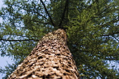 Tree. Look up the high tree stock photos