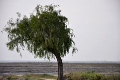 Tree. A green tree in front of cool and dry place Stock Photography