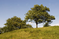 The tree. At the hill Stock Image