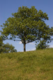The tree. At the hill Royalty Free Stock Photo