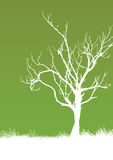 Tree. Vector illustration of a tree Royalty Free Stock Photography