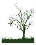 Tree. Vector illustration of a tree Stock Photography