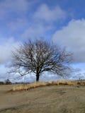 tree Arkivfoton