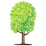 Tree. Green abstract alone tree with leaves Royalty Free Stock Image