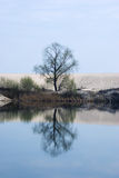 Tree. The lonely tree reflected on the water Stock Photography