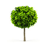 Tree. Royalty Free Stock Photography