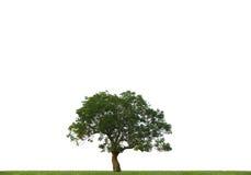 Free Tree Stock Photos - 12536723