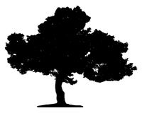Tree. Isolated on white background. This image is vector illustration Royalty Free Stock Image