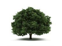 Tree. Stock Photos