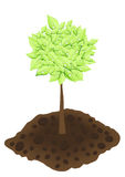 Tree. Vector illustration of ecology: tree on a white background Stock Image