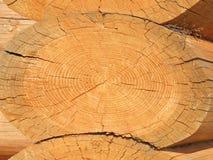 tree Royaltyfri Foto