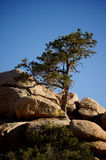 Tree. A tree on a rock in the desert Royalty Free Stock Photos