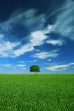 Tree. Lonely tree in a field on blue sky stock image