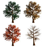 Tree. Digital tree in 4 different phases isolated on white background. Tree has green leaves ,yellow red and no leaves vector illustration