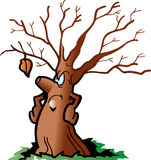 Tree Royalty Free Stock Photos
