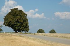A tree. Standing besides country road at oerfect summer day royalty free stock images