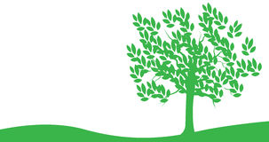 Tree. Illustration of green tree on white background Stock Photography