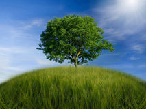 Tree. Lonely tree on the hill royalty free stock photo